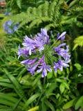 purples royalty-vrije stock foto's