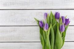 purpleviolet郁金香框架在白色土气木背景的 免版税库存图片
