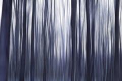 Purplewoods fotografia stock