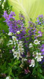 Purplr and white flowers in the park Royalty Free Stock Photo