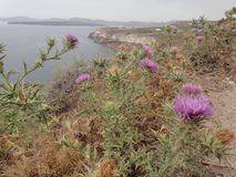 Purpple-Blumen Stockfotos