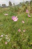 Purpple-Blumen Lizenzfreies Stockfoto