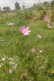 Purpplebloemen Royalty-vrije Stock Foto