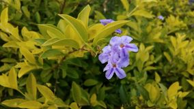 Purpule kwiat Natura Liście Tło one Obraz Royalty Free