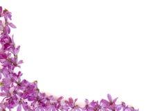 Purpur blüht Hintergrund Stockfotografie
