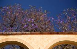 Purpur blüht weiße Adobe-Wand Queretaro Mexiko Stockfotos