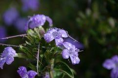 Purpur blomma i blom royaltyfri foto