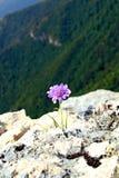 Purpur blomma på kanten Arkivfoto