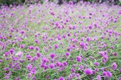 Purpur blommabakgrund Arkivfoton