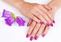 Purpur manicure Royaltyfria Foton
