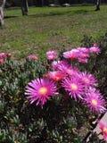 Purpur mit gelber Blume stockfotos