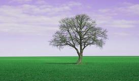purpur sky Royaltyfria Bilder