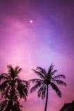 purpur sky Fotografering för Bildbyråer