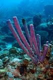 purpur svampkaminrör Royaltyfri Bild