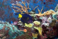 purpur tang Royaltyfri Bild