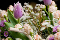 purpur tulpan Royaltyfri Foto