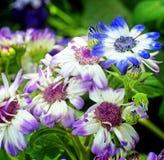 Purpur und andere Blumen Lizenzfreie Stockbilder