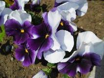 Purpur und Blume im Garten stockfoto