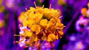 Purpur und Orange lizenzfreies stockbild