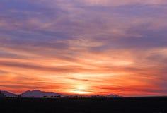 Purpur und orange glühender Sonnenuntergang mit Zuckerrohrschattenbild Stockfotos