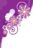 purpur white för bakgrund Royaltyfri Fotografi