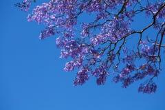 Purpura blommor Arkivfoton