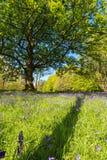 Purpura blommor field i fjäder Arkivfoton