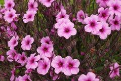 Purpura blommor, madeira, portugal Royaltyfria Bilder