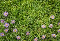 Purpura blommor på en gräs- bakgrund Royaltyfria Foton