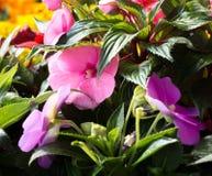 Purpura blommor på Green Royaltyfri Fotografi