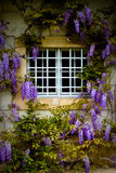 Purpura blommor runt om fönster Fotografering för Bildbyråer