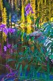 Purpura Columbine Royaltyfria Bilder