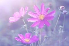 purpura fina blommor Mjuk effekt, selektiv fokus Royaltyfria Bilder