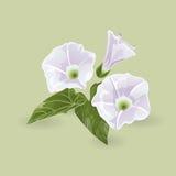 purpura fina blommor också vektor för coreldrawillustration Royaltyfri Fotografi