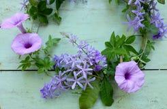 purpura härliga blommor Fotografering för Bildbyråer