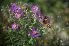 Purpura i kolor żółty kwitniemy z motylem zdjęcie royalty free
