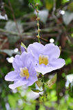 Purpura kwiat obraz stock