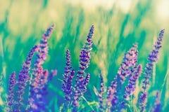Purpura kwiat Fotografia Royalty Free