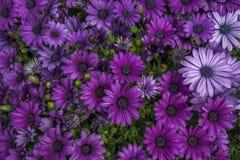 Purpura kwiat zdjęcie stock