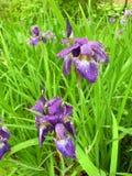 Purpura kwiat i Zielona trawa zdjęcie stock