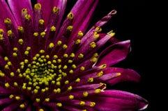 Purpura kwiat Upclose Zdjęcia Stock