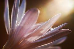 Purpura kwiat w świetle słonecznym Obrazy Stock