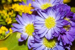 Purpura kwiat w bukiecie Zdjęcia Stock