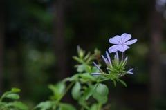 Purpura kwiat wśród natury zdjęcia stock
