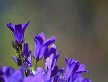 Purpura kwiat z miękkim tłem Zdjęcia Stock