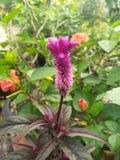 Purpura kwiatu bukiety w ogródzie Zdjęcia Stock