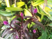 Purpura kwiatu bukiety w ogródzie Fotografia Stock