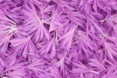 Purpura kwiatu płatków tło zdjęcie stock