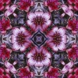 Purpura kwiatu płytka obraz stock