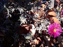 Purpura kwiaty dostaje jesień w Falkensee obrazy stock